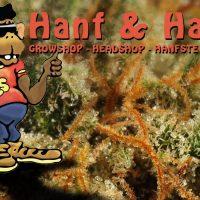 hanf & hanf, cannabis in österreich