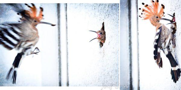 q-kolibri-family