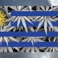 uruguay cannabis flagge