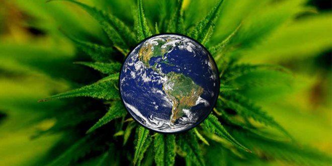 cannabis pflanze weltkugel